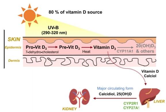 Vitamine D tegen depressie en ontstekingsziekten